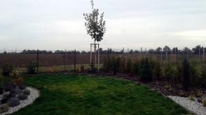 Nová zahrada-pokládka travního kobrce W-GARDEN-Realizace zahrad0039