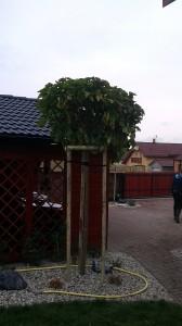 Nová zahrada-pokládka travního kobrce W-GARDEN-Realizace zahrad0042