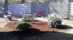 Nová výsadba-W-GARDEN-Realizace zahrad0019