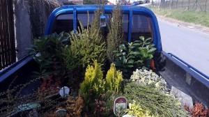 Výsadba okrasných dřevin a travního koberce-W-GARDEN-Realizace zahrad0029