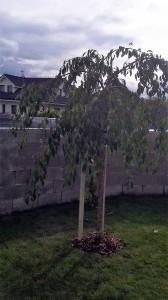 Nová zahrada-W-GARDEN-Realizace zahrad0002